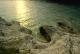 Le foto del mare e delle rocce di Saccorgiana scattate da Arduino Codalli.